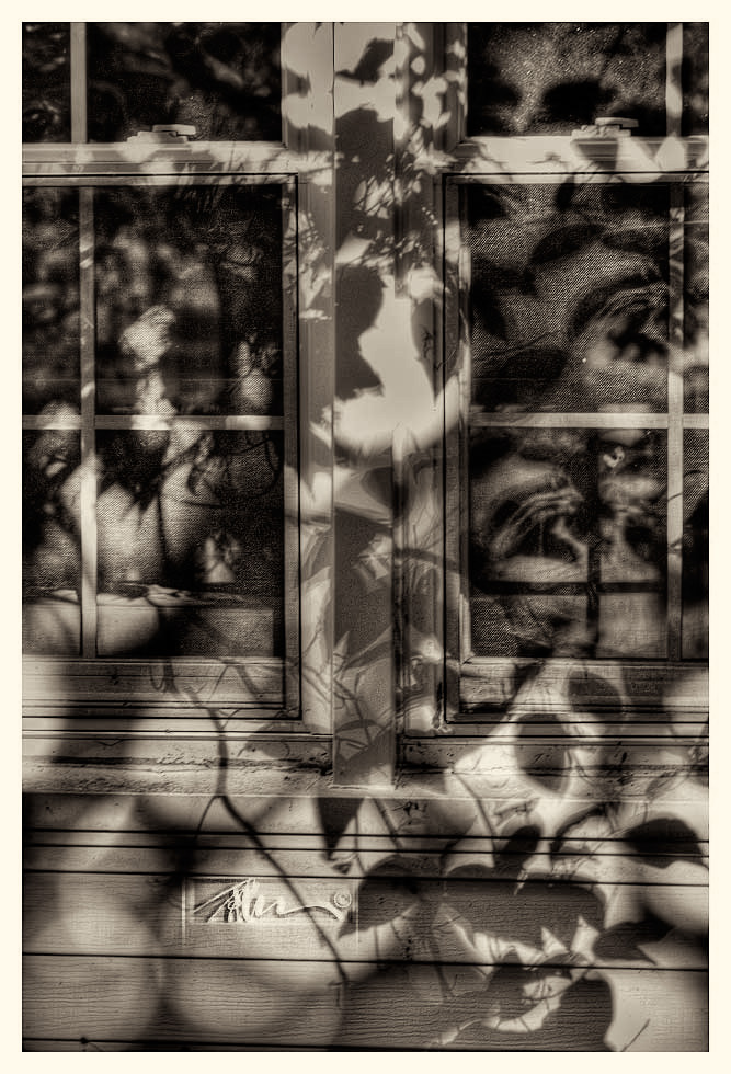 Dogwood Shadow - © John Neel