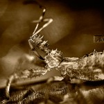Bug - © John Neel