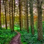 Woods - © John Neel