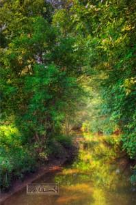 Creek In Morning Light - © John Neel