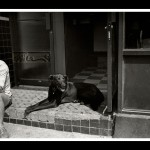 Dog _ © John Neel