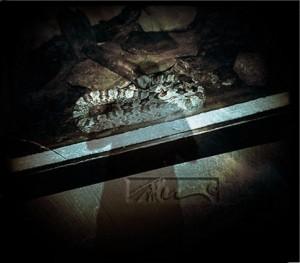 Snake - © John Neel