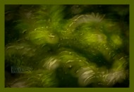 Bush - © John Neel   Zone-Sieve