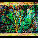 Tree - © John Neel - digitally painted HDR Pinhole