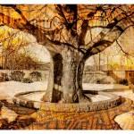 Pitts Tree - © John Neel