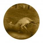 Deer -  John Neel