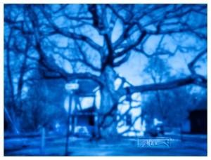 Big Tree - © John Neel