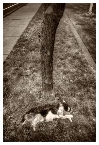 Untitled – © John Neel