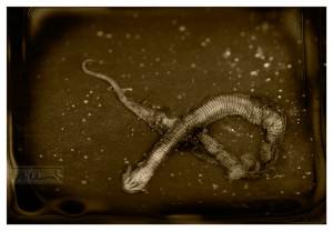 Dead Snake - © John Neel