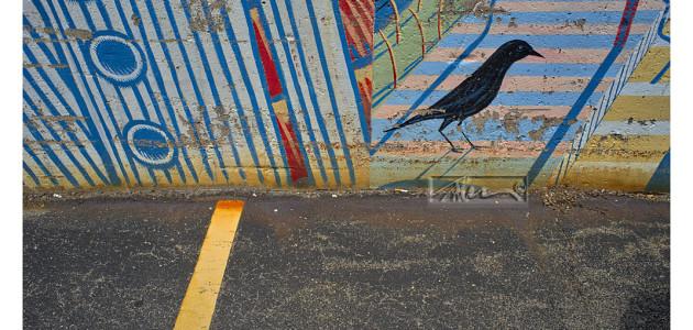 Crow – © John Neel