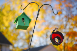 Bird House and Feeder – © John Neel